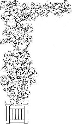 Italophile Coloring Pages Pinocchio 1