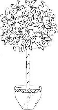 Italophile Coloring Pages Orange Tree
