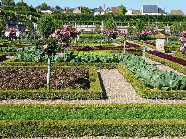 You Can Pick Out (from The Foreground To The Back) Carrots, Lolla Rossa  Lettuce, Cabbage, And A Red Oak Leaf Lettuce. The Standard Roses Are Meant  To ...